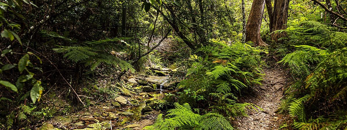 Sutherland Shire Family Photography & Wedding Portrait Location - Coonong Creek Bushland Reserve Map